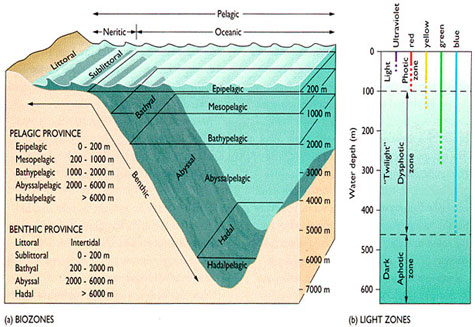 Diagram on left shows how the ocean is divided into different depth categories.