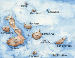 Watercolor painted map of the Galapagos Islands by E. Paul Oberlander, WHOI, with the major islands labeled.