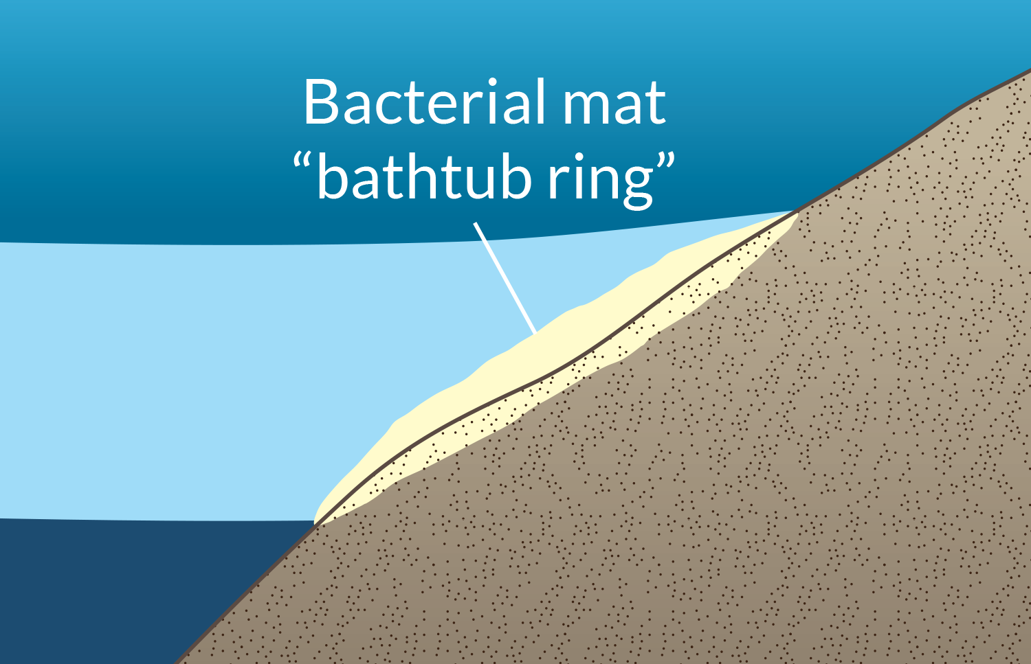 """The halocline sits on top of the very salty water in the basin and touches the sides of the basin. Researchers call that area the """"bathtub ring"""" because it is like the ring of soap scum and dirt that forms on a bathtub when the water is drained out."""