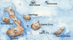 Introduction To The Galapagos Islands Dive Discover