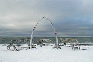 Whale bones and skin boat frames in Barrow, Alaska. (NOAA image)