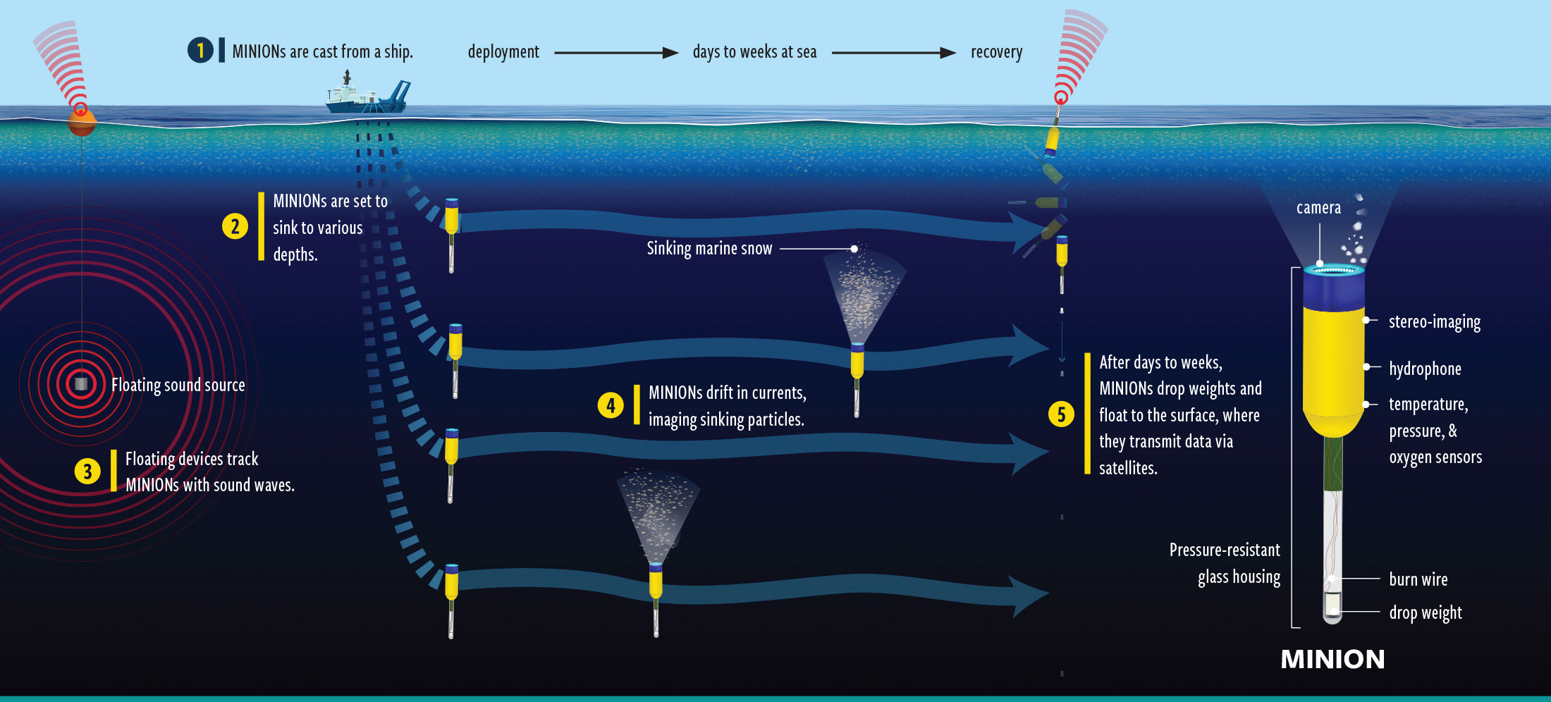 Illustration of how the Minion works. Illustration by Natalie Renier, ©Woods Hole Oceanographic Institution